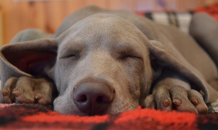 great teepee dog bed
