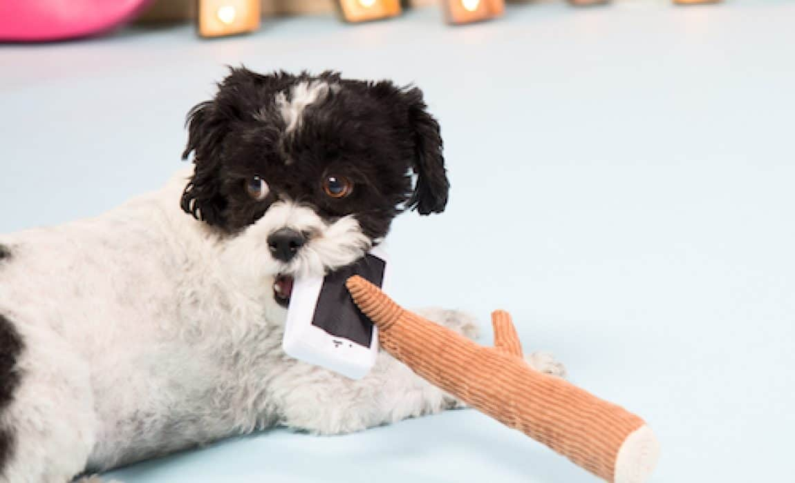selfie stick dog toy