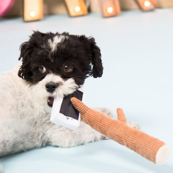 selfie stick dog toy