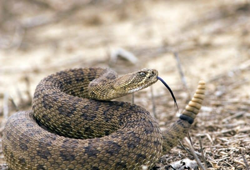 snake-bit-my-dog