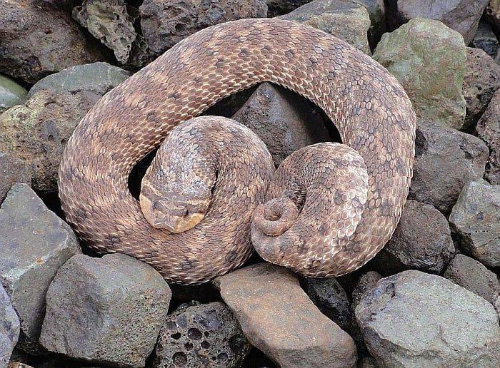 snake-biting-my-dog