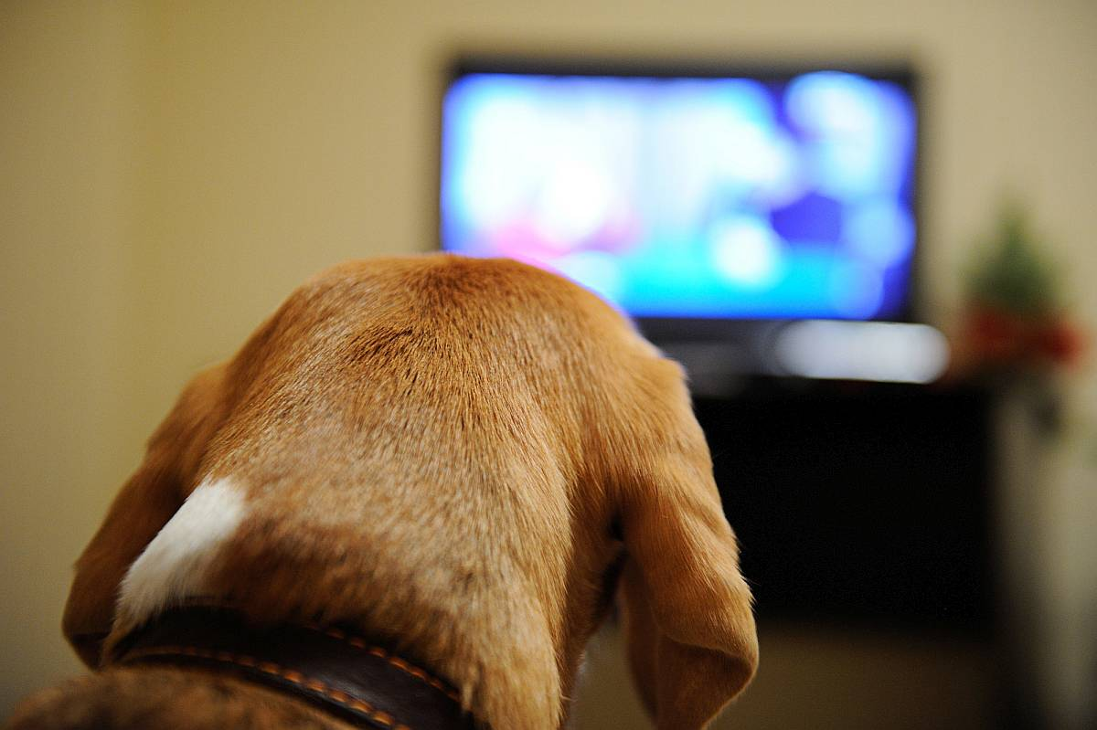 Dogtv review does it work is it worth the money solutioingenieria Choice Image