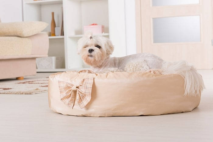 beds for dogs with dysplasia