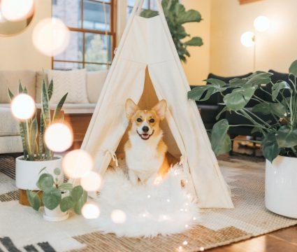 best-dog-teepee-beds
