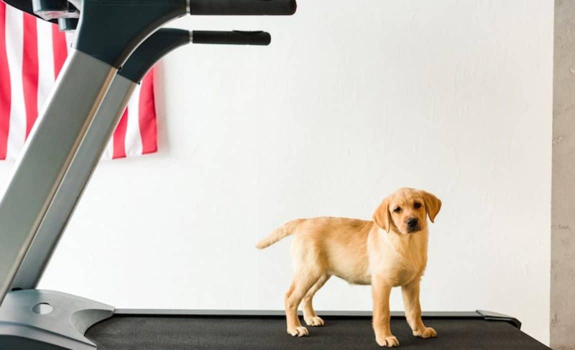 best-dog-treadmills