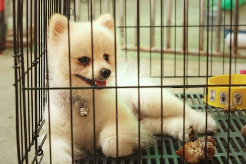 dog peeing in crate