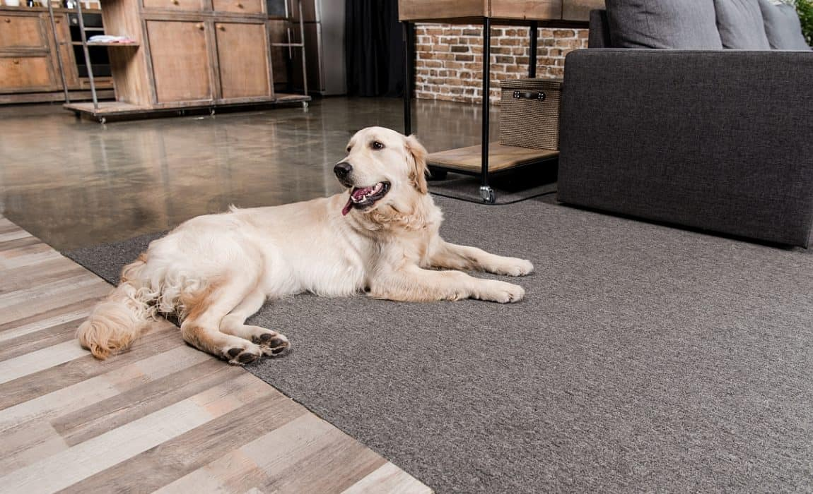 6 Dog Proof Flooring Options That Will