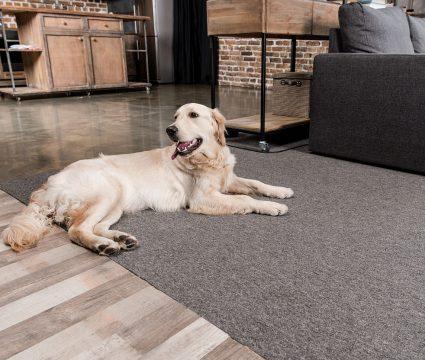 dog proof floors