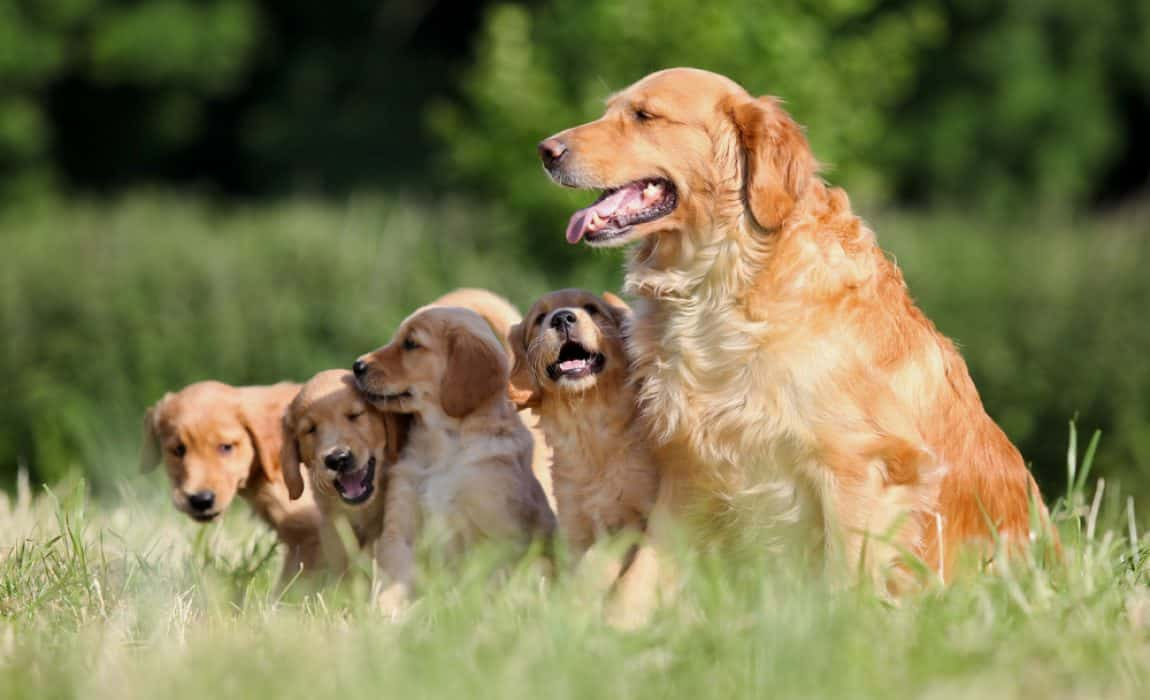 14 Criteria For Finding a Good, Reputable Dog Breeder