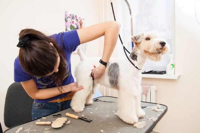 Average dog grooming prices services how much will you spend dog grooming prices solutioingenieria Image collections