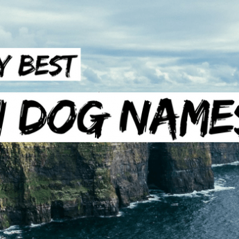30 Viking Dog Names: Warriors & Norse Naming!