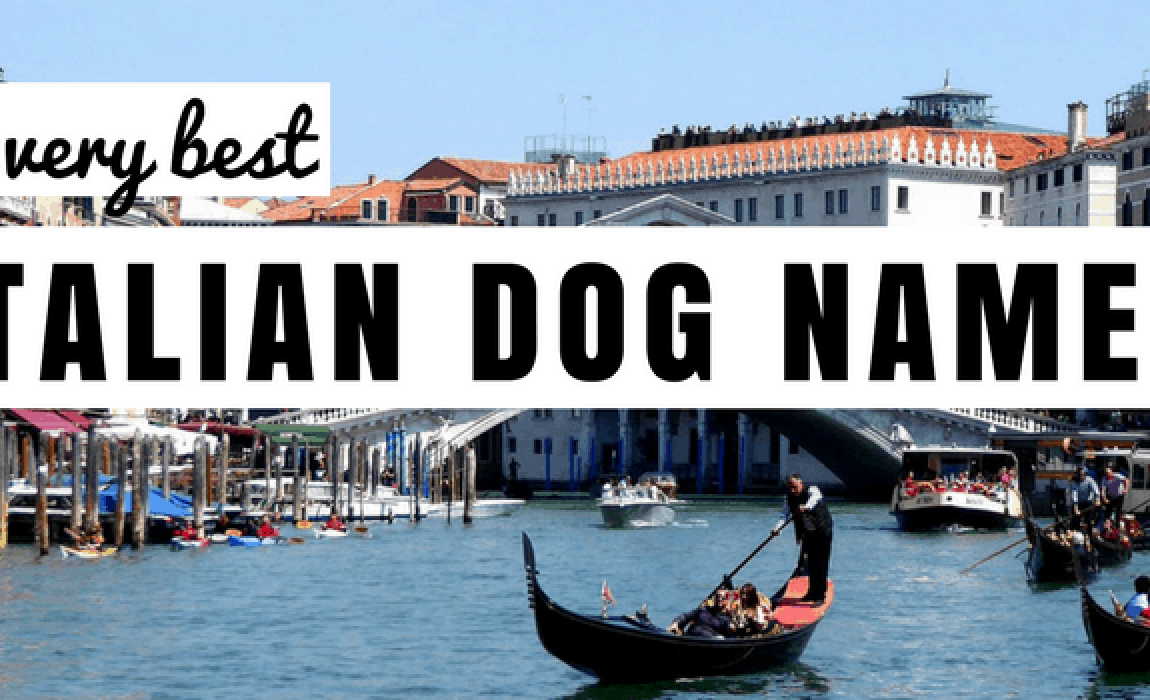 "Italian Boy Name: 130+ Italian Dog Names: The Perfect ""Primo"" Name For Your Pup"