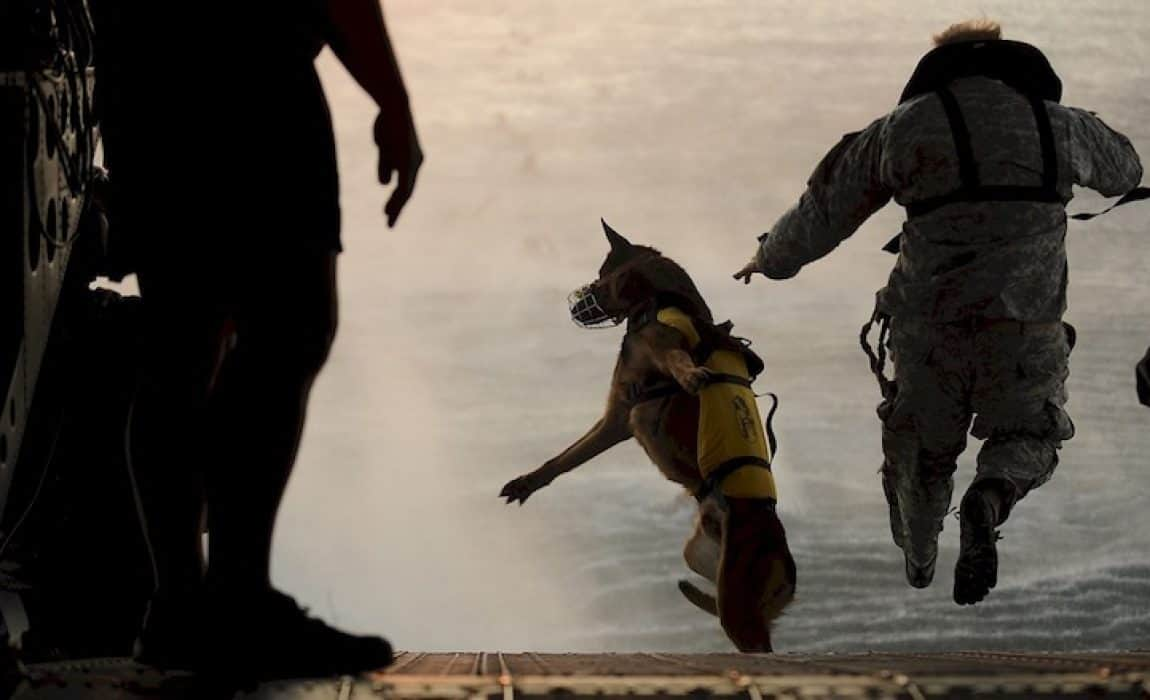 Military Dog Names 150 Name Ideas For Tough Canines