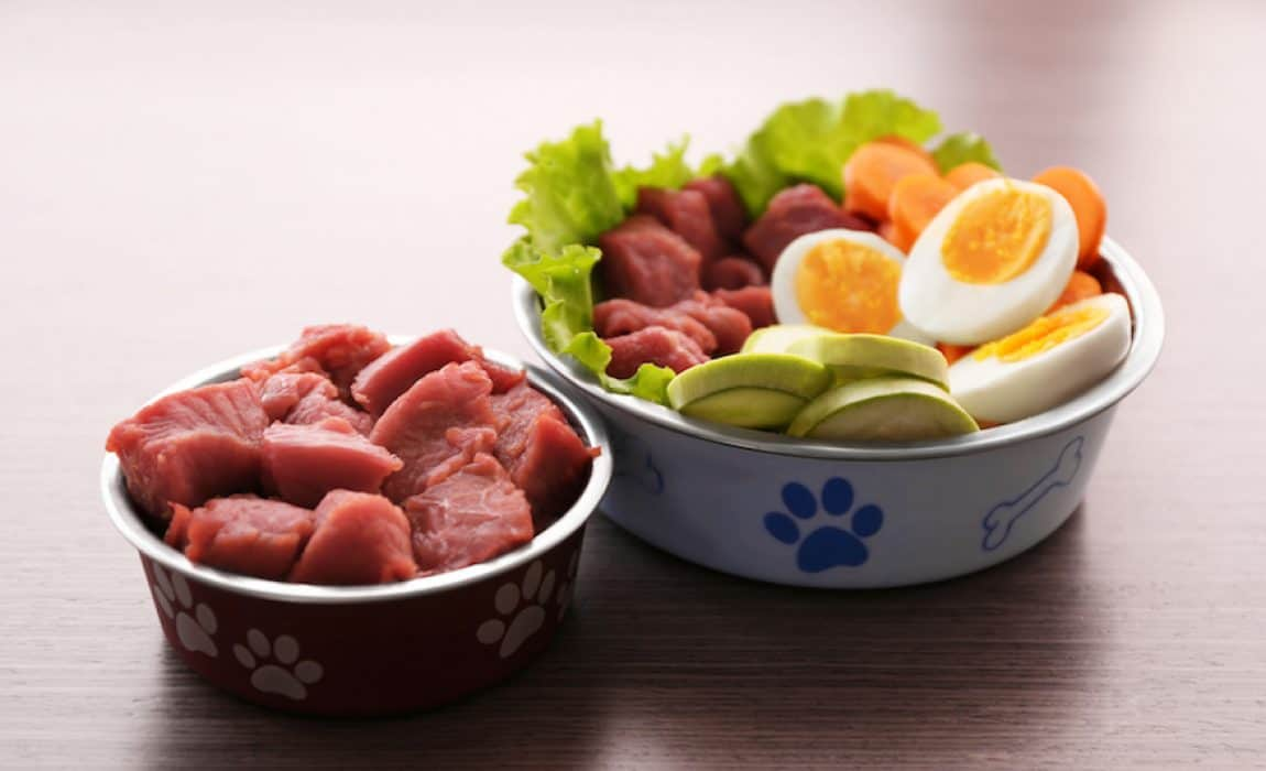 Raw Dog Food Pros And Cons Should I Feed My Dog Raw Diet