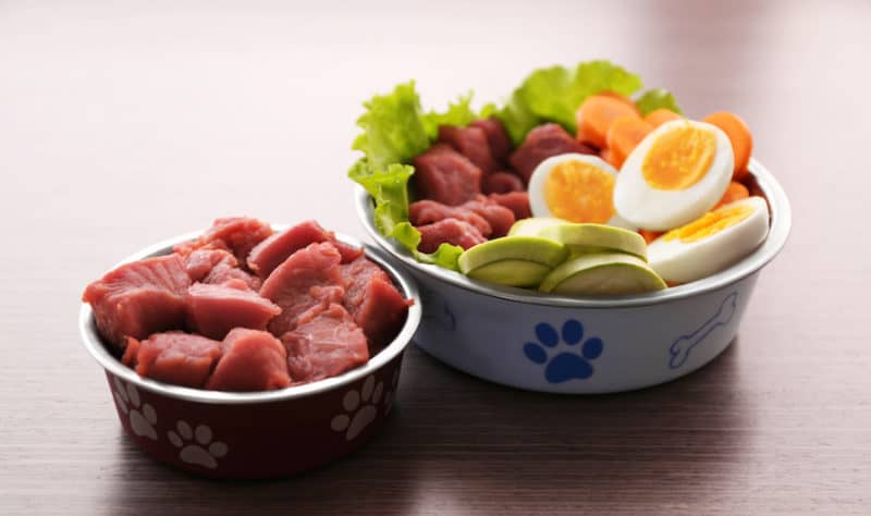 Best Major Brand Dog Food