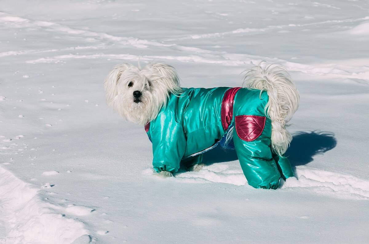 8 Best Dog Coats with Legs  2019 Reviews   Complete Canine Coverage for  Cold! 6d7a7ee15