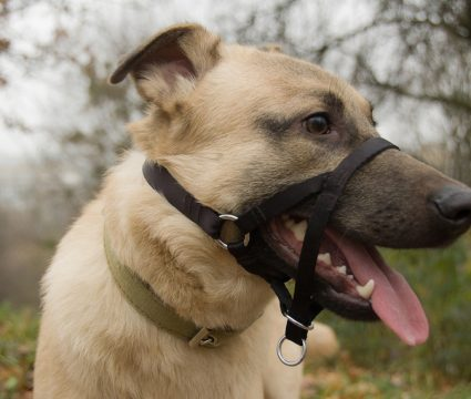 best-head-halter-for-dogs