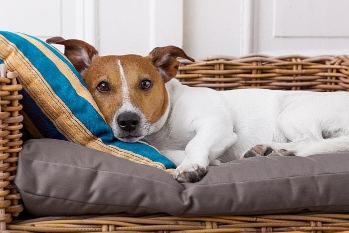dog corner bed 1