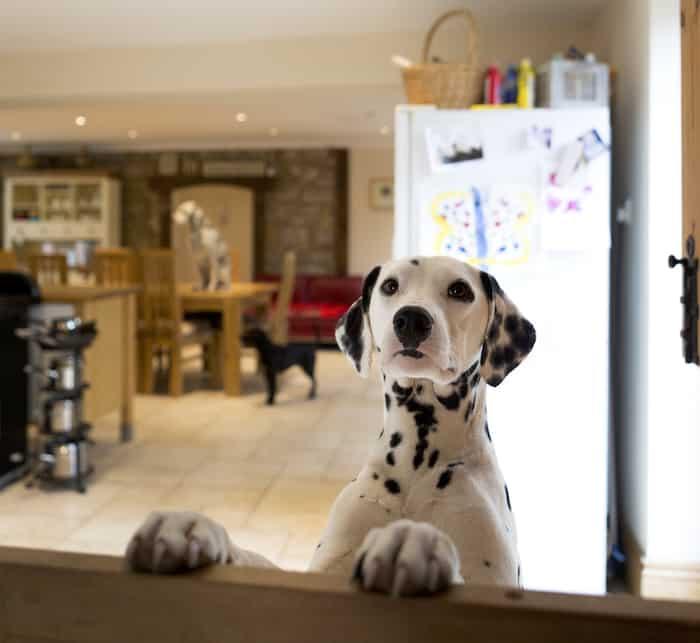 dog on counter