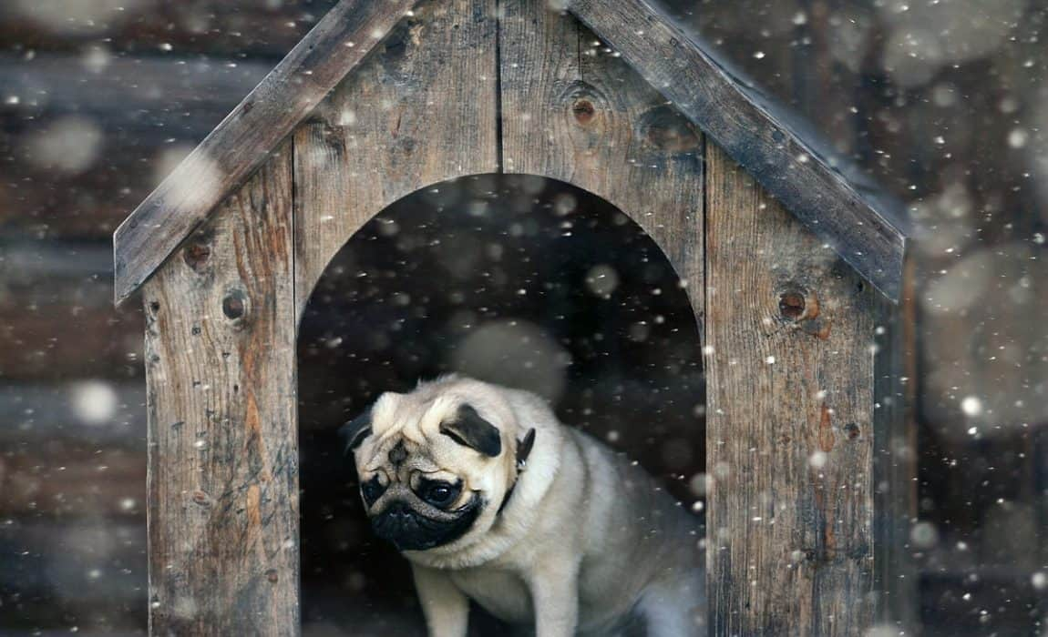 5de178f827f 5 Best Winter Dog Houses: Keeping Your Canine Warm & Cozy