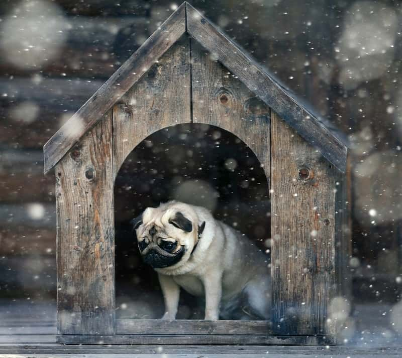 Best winter dog house