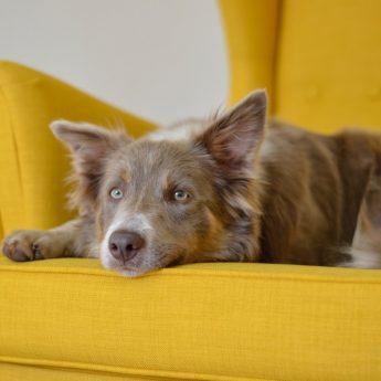 best-dog-sofa-beds