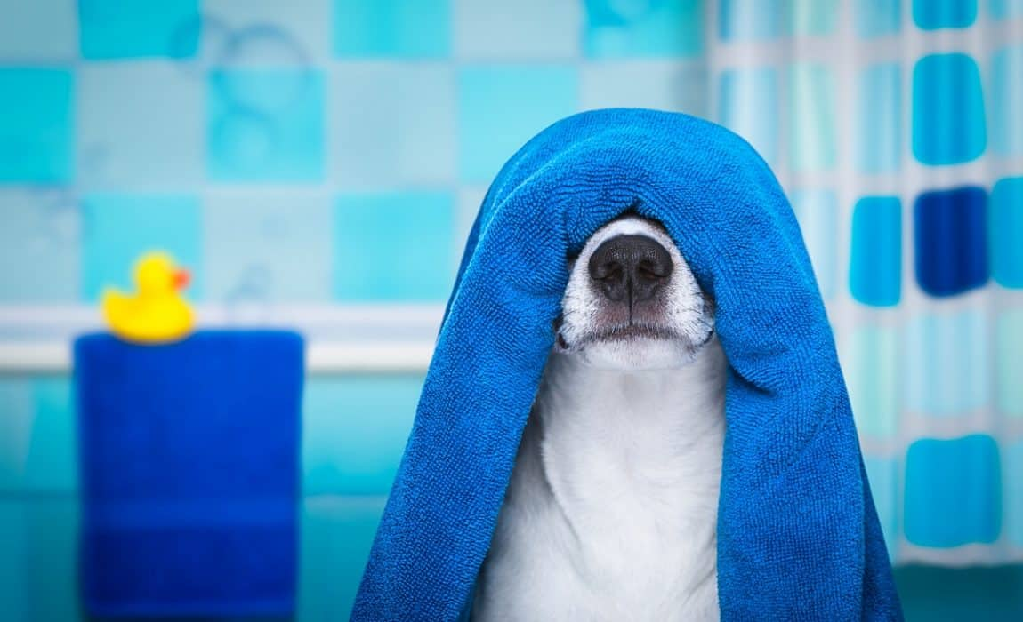 best towels for dogs
