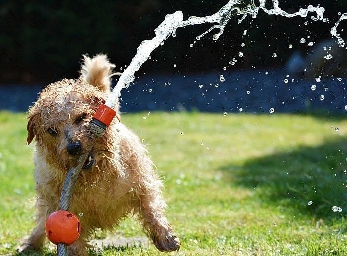 dog bath attachments