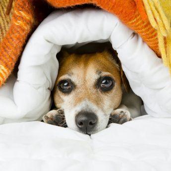 good winter dog bed
