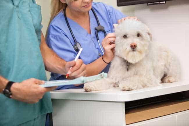 taking dog to vet
