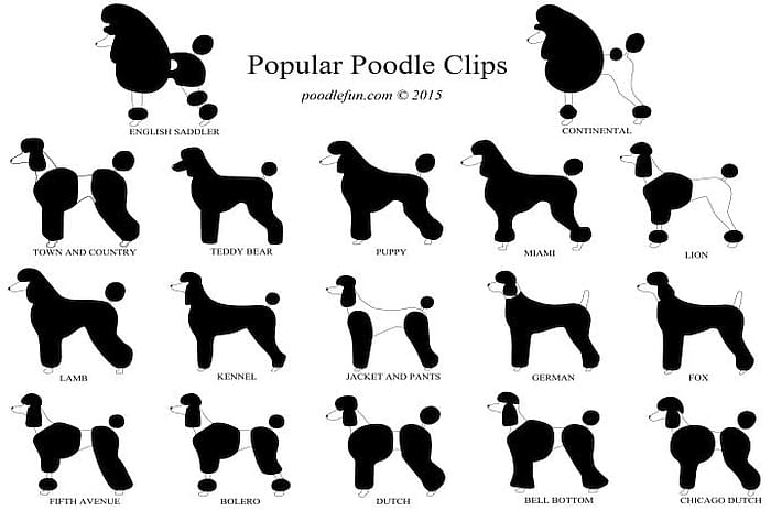 Types Of Poodles 7