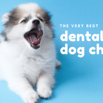 best-dental-dog-chews