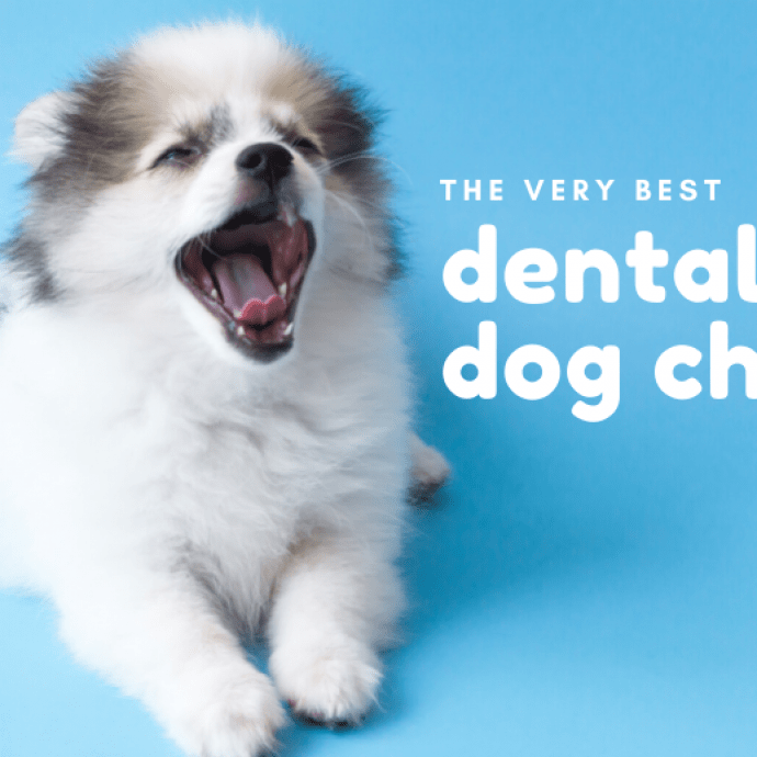 5 Best Dental Chews For Dogs [2020