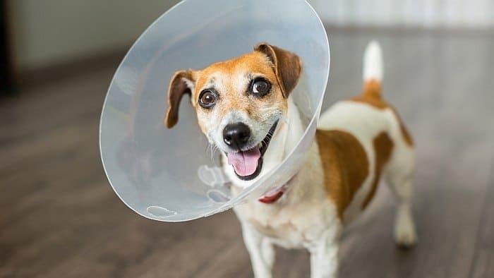 best dog e cones