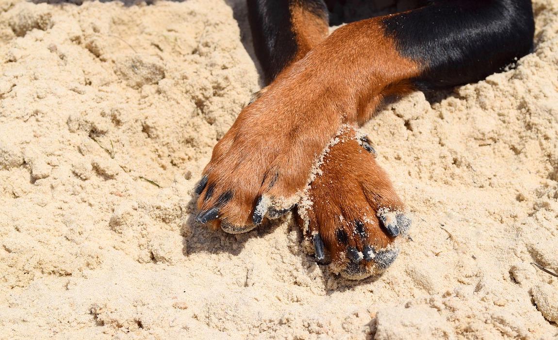 best-dog-nail-grinders