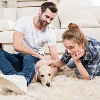 best-worst-dog-breeds-first-time-owners