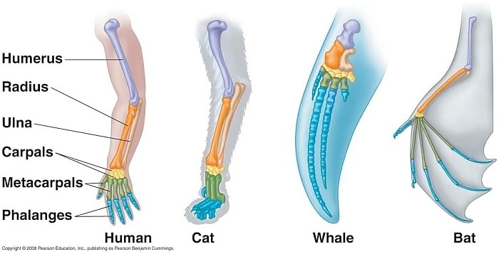 declawing your dog