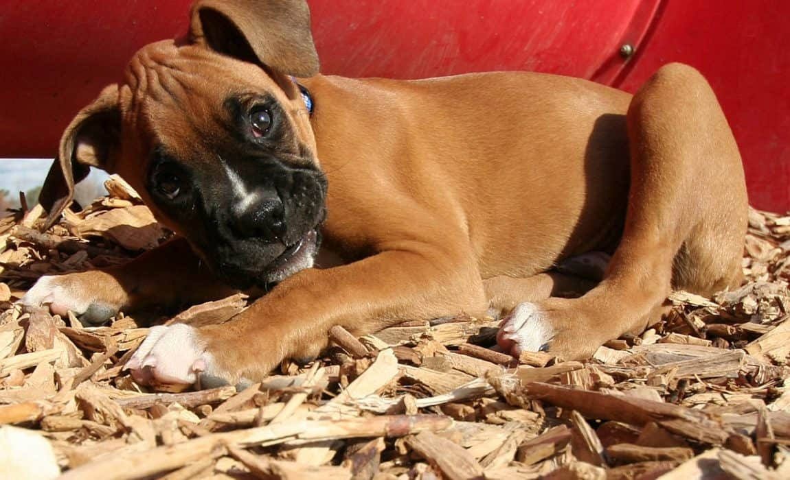3 Best Beddings For Your Dog House Keep Your Canine Cozy