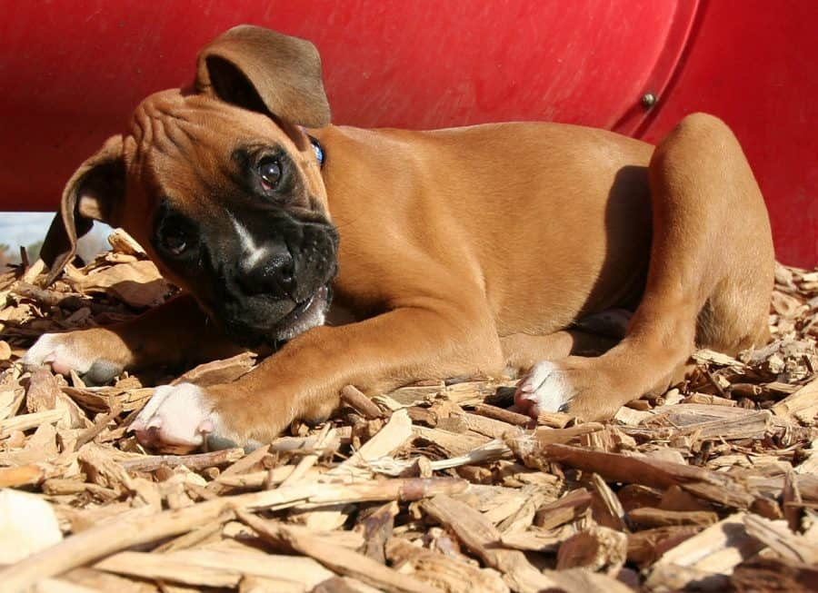 3 Best Beddings For Your Dog House Keep Canine Cozy