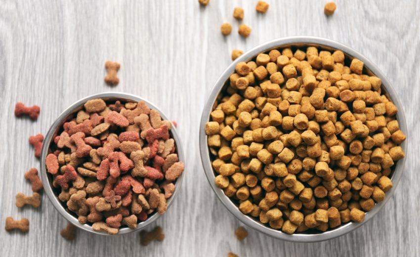 9 Best Dog Food Storage Containers [2021 ]: Keeping Fido's Kibble Fresh!