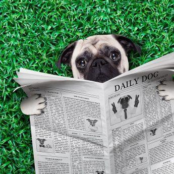 dog magazines