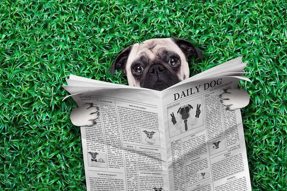Dog Magazines 10 Of The Best Print Publications About Your Pooch