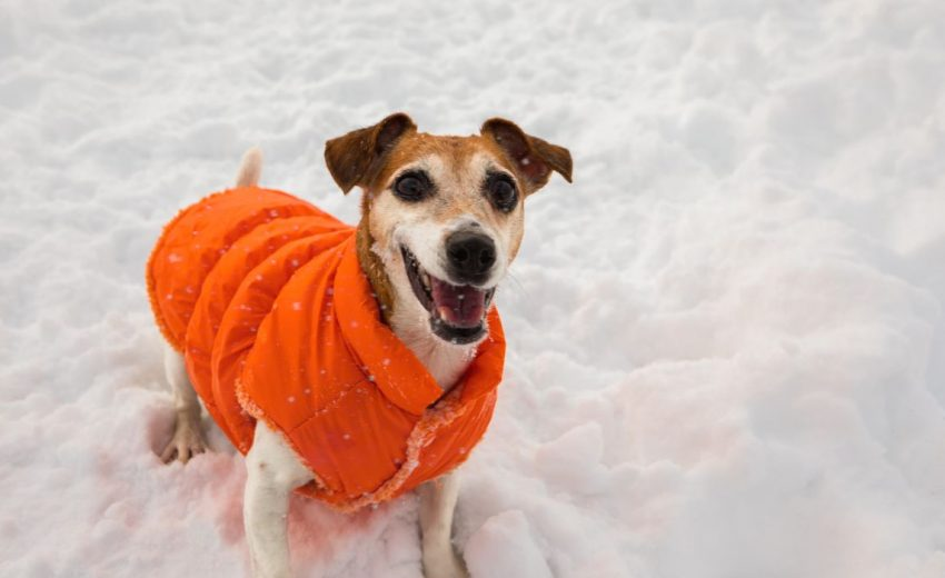 12 Best Winter Dog Coats Jackets, Best Winter Dog Coat Uk