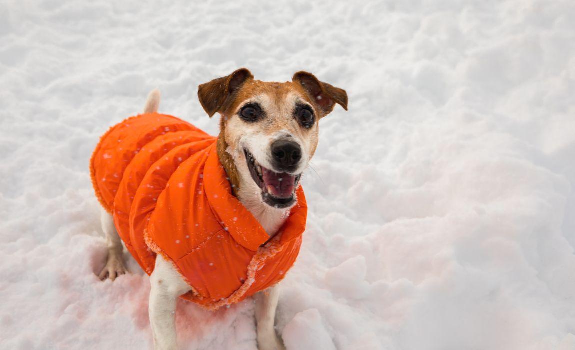 Sml Size XXS Greyhound Winter Cozy Jackets