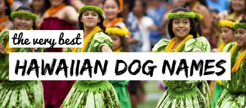 hawaiin-dog-names