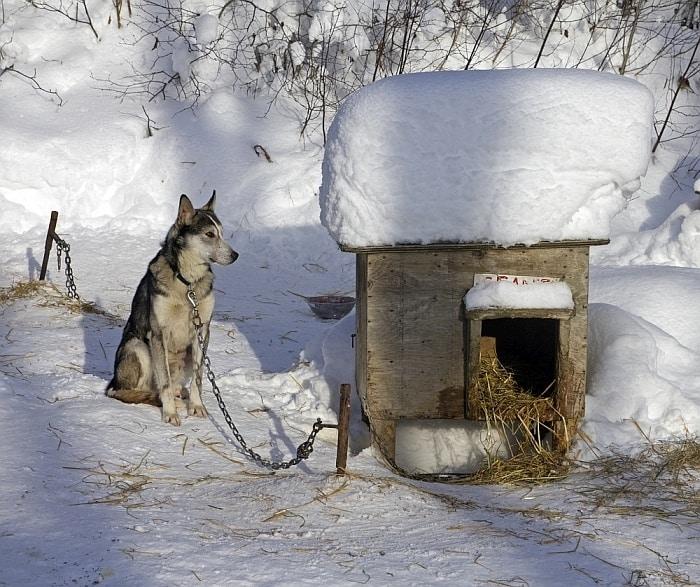 heating a dog house