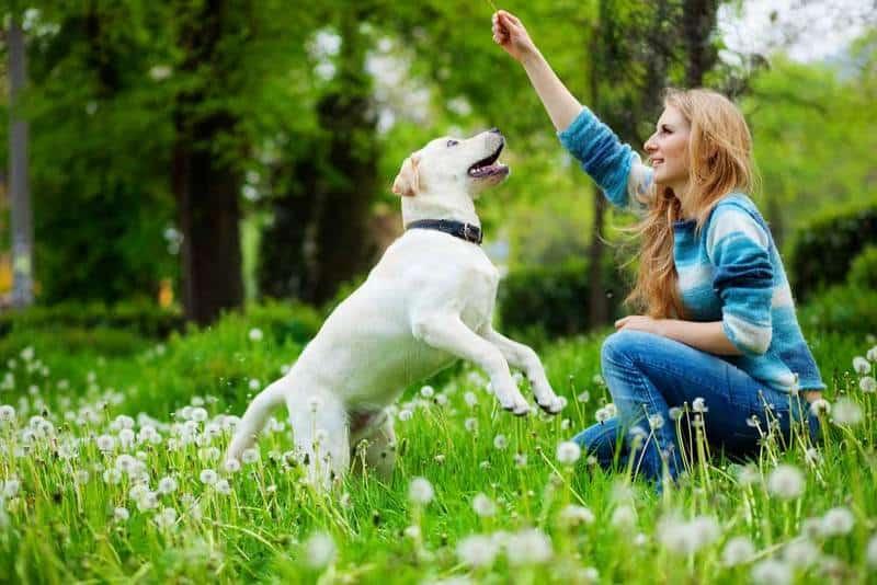 best-dog-training-breeds