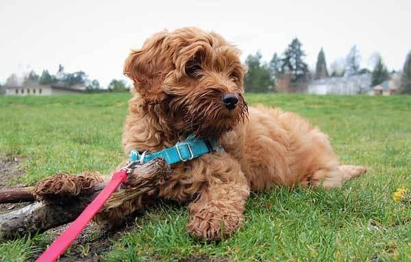 dog-collar-or-harness