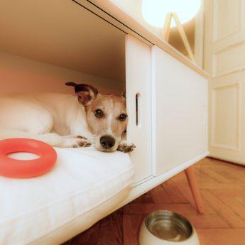 dog furniture crates