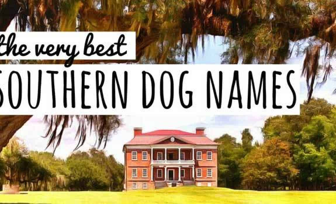 90 Southern Dog Names Darn Good Dixie Doggie Names